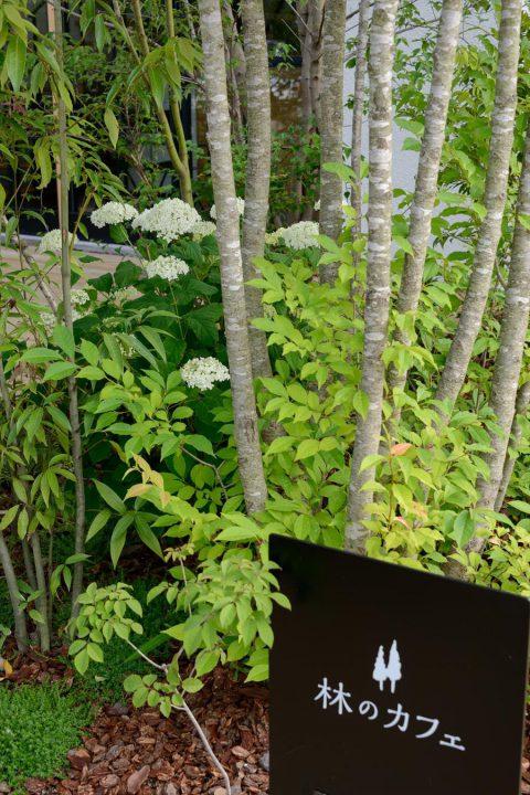 150種類以上の植物が植えられている林のカフェの庭