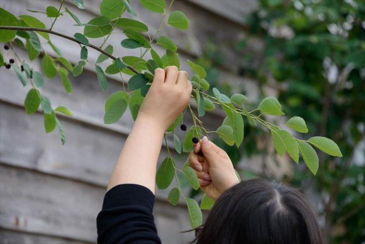 倉敷市に完成した林のカフェ。季節によって木の実の収穫ができます。