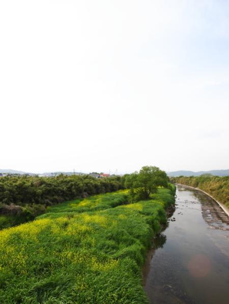 岡山市北区撫川の家の近くを流れる足守川の景色がきれいです