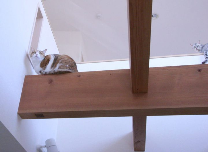 猫が自由に通り抜ける梁