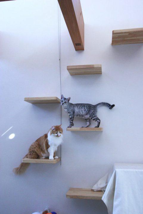 猫と犬と暮らす注文住宅