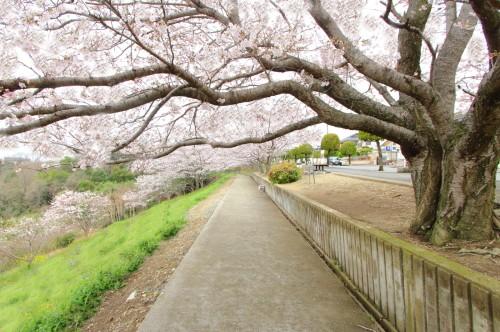 桜が丘の家