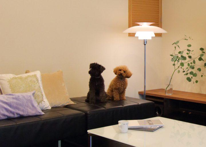 愛犬とリビングインテリア