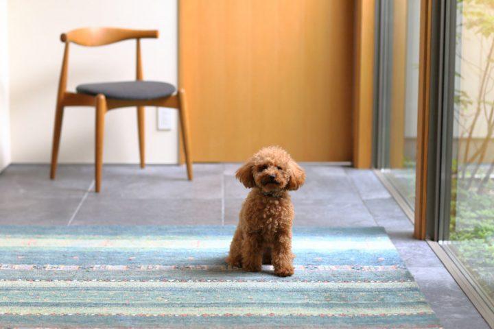 中庭を眺める玄関と愛犬