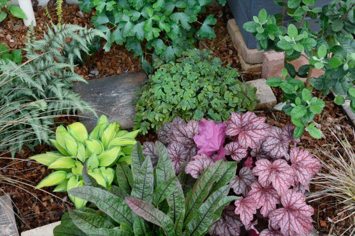 岡山市中区に完成した注文住宅、奥様が楽しんでいる植栽