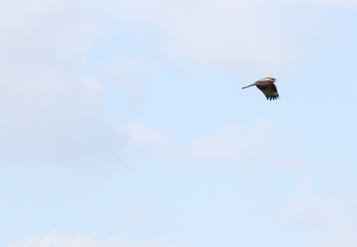 田園風景には鳥もたくさん飛んでいます