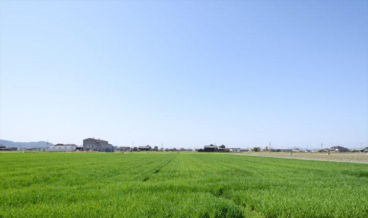 家から見える気持ちのいい田園風景