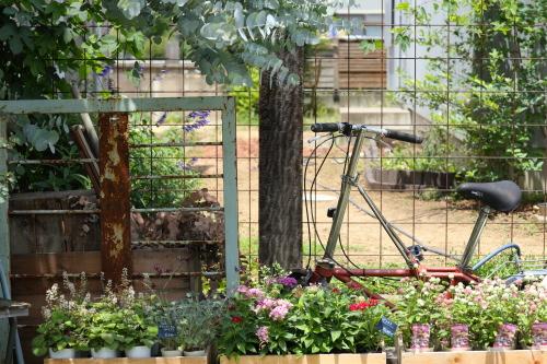 外にもたくさんの植物があり、とてもキレイなお庭