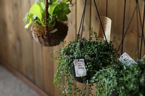 店内はいろんな植物であふれていて癒されます