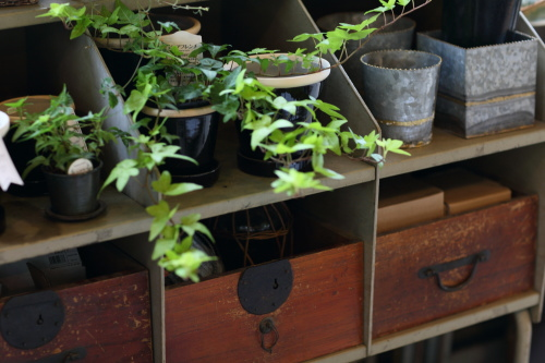 アンティークな家具も植物とあってて落ち着く店内