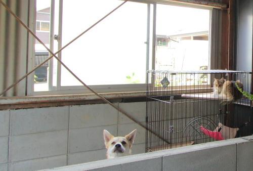 店内には看板犬と猫ちゃんもいて賑やか