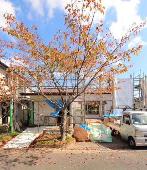 大きな桜の木が紅葉している店舗外観